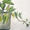 plantas-oberrohabch-1
