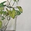 plantas-oberrohabch-2